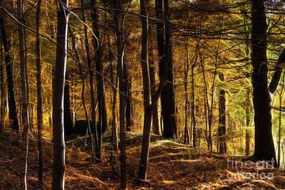Autumn Forest Poster by Lutz Baar