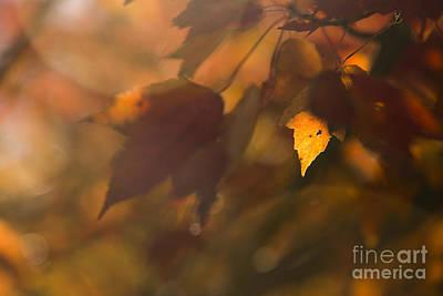 Autumn Leaf In Sunshine Poster by Diane Diederich
