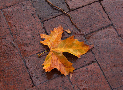 Autumn Leaf On Bricks Poster by Art Block Collections