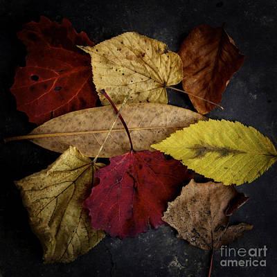 Autumn Leaves Poster by Bernard Jaubert