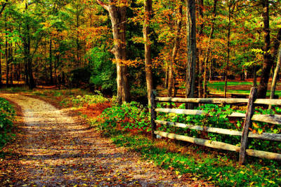 Autumn Moment - Allaire State Park Poster by Angie Tirado