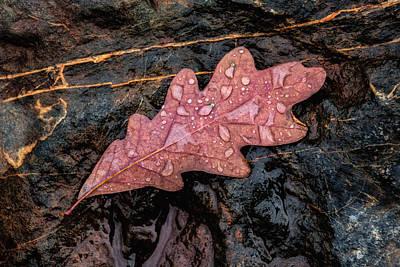 Autumn Oakleaf On Rock Poster by Tom Mc Nemar