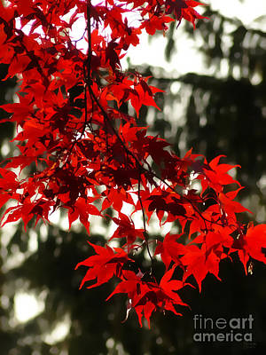 Autumn Red Poster by Jeff Breiman