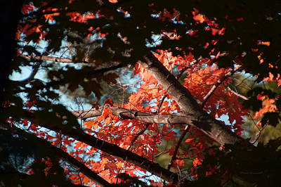Autumn Red Trees 2015 02 Poster by Thomas Woolworth