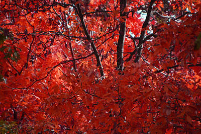 Autumn Red Trees 2015 Poster by Thomas Woolworth