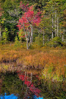 Autumn Reflections On Cary Lake Poster by David Patterson