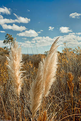Autumn Seat Oats  Poster by Debra Forand