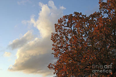 Autumn Sky Poster by Jeannie Burleson