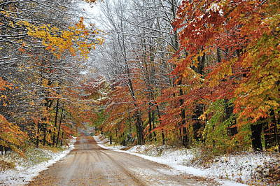 Autumn Snow In Manistee National Forest Poster by Terri Gostola