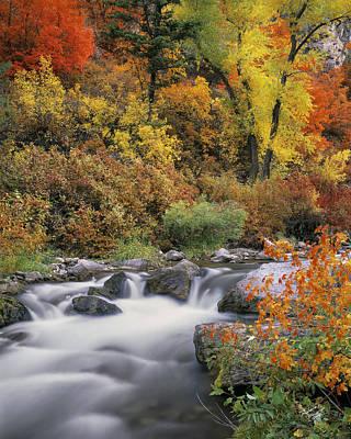 Autumn Splendor Poster by Leland D Howard