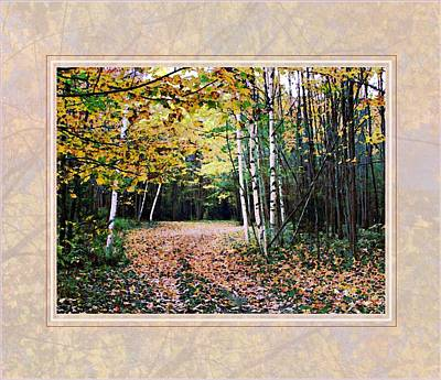Autumn Trail Through The Birch Trees Poster by Joy Nichols