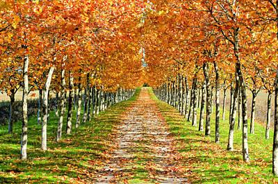 Autumn Tree Poster by Julien Fourniol/Baloulumix