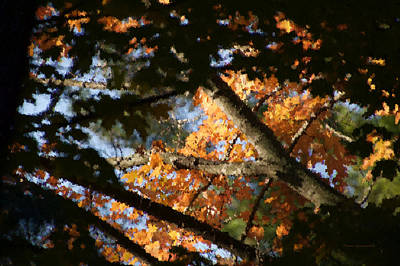 Autumn Trees 2015 Pa 01 Poster by Thomas Woolworth