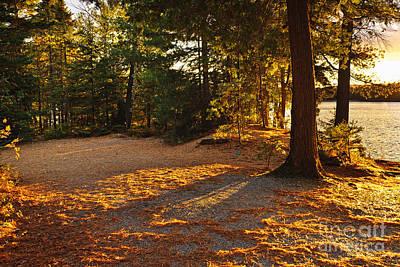 Autumn Trees Near Lake Poster by Elena Elisseeva