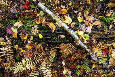 Autumn Upper Shavers Fork Preserve Poster by Thomas R Fletcher