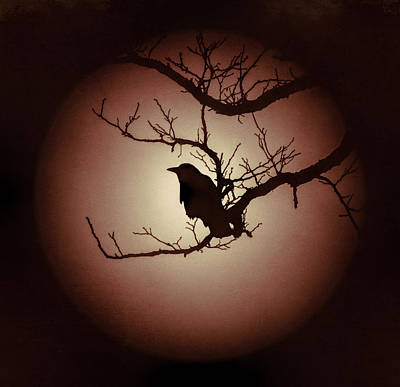 Autumn's Light Black Crow Silhouette Poster by Terry DeLuco