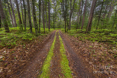 Backroad In Sleeping Bear Dunes Poster by Twenty Two North Photography