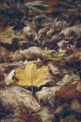Backyard Leaves Poster by Scott Norris