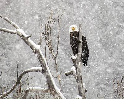 Bald Eagle In A Blizzard 3 Poster by LeAnne Perry