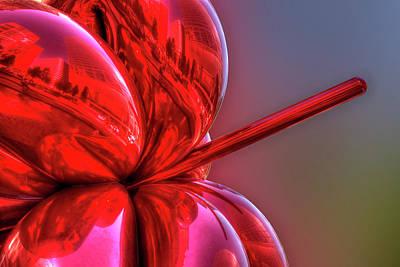 Balloon Flower Poster by Paul Wear