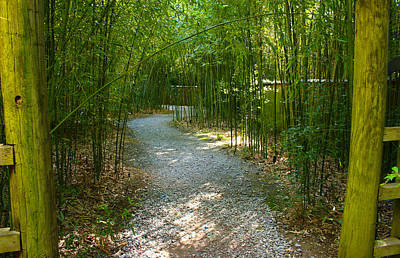 Bamboo Path 2 Poster by Denise Keegan Frawley