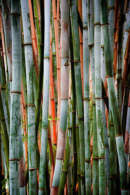 Bamboo Seduction II Poster by Karen Wiles