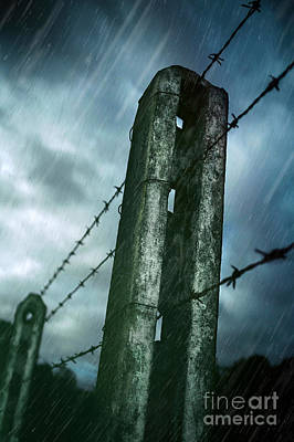 Barbed Wire Fence Poster by Carlos Caetano