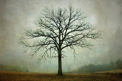 Bare Tree And Fog Poster by Dave Gordon