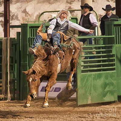 Bareback Riding At The Wickenburg Senior Pro Rodeo Poster by Priscilla Burgers