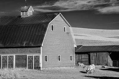 Barn In The Palouse Poster by Jon Glaser