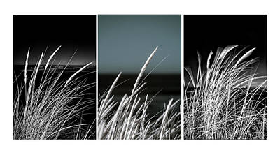 Beach Grasses Triptych Poster by Russ Dixon