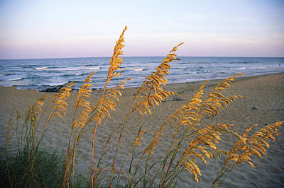 Beach Scene With Sea Oats Poster by Steve Winter