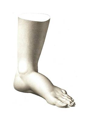 Beautiful Engraving Of A Foot Poster by Village Antiques