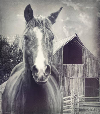 Beauty And The Barn Poster by Barbara Hymer
