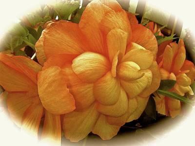 Begonia In Semi-profile Poster by Elizabeth Tillar