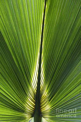 Bermuda Palmetto Palm Leaf Poster by Tim Gainey