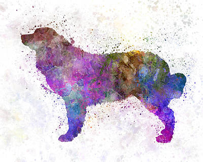 Bernese  Mountain Dog In Watercolor Poster by Pablo Romero