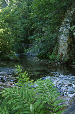 Big Sur River - Ventana Wilderness Poster by Soli Deo Gloria Wilderness And Wildlife Photography