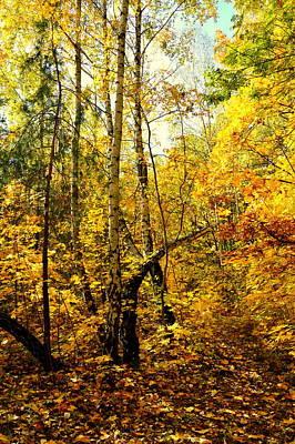 Birch Autumn Poster by Henryk Gorecki