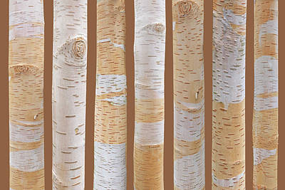 Birch Tree Abstract On Brown Poster by Gill Billington
