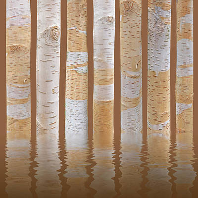 Birch Tree Abstract Reflections On Brown Poster by Gill Billington