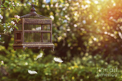 Birdcage In Spring Poster by Amanda Elwell
