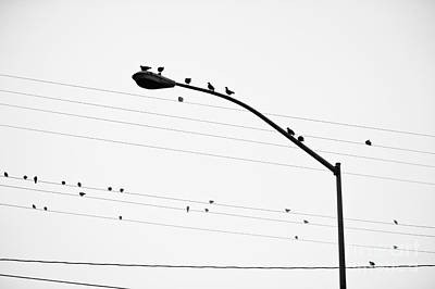 Birds On Power Lines And Lamp Post Poster by Eddy Joaquim