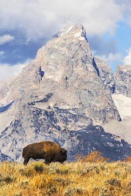 Bison And Tetons In Gtnp Poster by Vishwanath Bhat