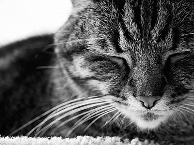 Black And White Cat Nap Poster by Rachel Morrison