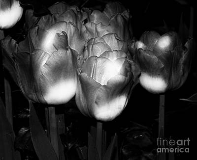 Black And White Tulips Poster by Kathleen Struckle