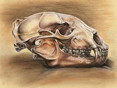 Black Bear Skull Poster by Darlene Watters