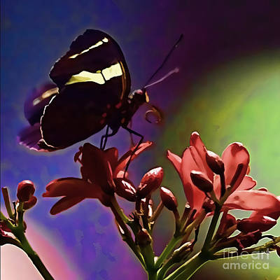 Black Butterfly With Oil Effect Poster by Tom Prendergast