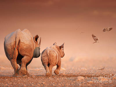 Black Rhino's Poster by Johan Swanepoel
