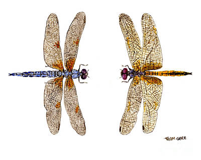 Bleached Skimmer And Hyacinth Glider Poster by Thom Glace